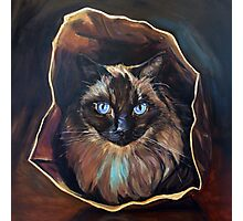 Cat's in the Bag Photographic Print