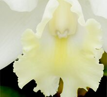 The Christening - Orchid Alien Discovery by ©Ashley Edmonds Cooke