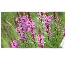 flower purple grass crybaby Poster