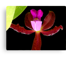 This is a Stickup! - Orchid Alien Discovery Canvas Print