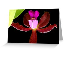 This is a Stickup! - Orchid Alien Discovery Greeting Card