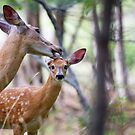 Aw Mom!…my fur's fine - White-tailed deer by Jim Cumming