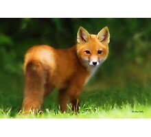 Fiery Fox Photographic Print