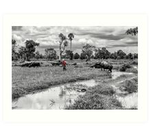 Cambodia:  Working with the Water Buffalo Art Print