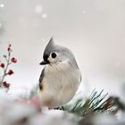Snow White Tufted Titmouse by Christina Rollo