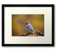 Fall Finch Framed Print