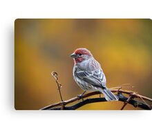 Fall Finch Canvas Print