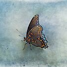 Butterfly on Blue by Sandy Keeton