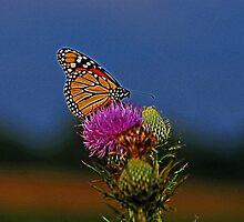 Colorful Monarch by Sandy Keeton