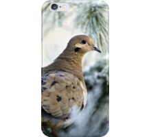 Winter Mourning Dove iPhone Case/Skin