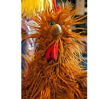 Frazzled Chicken Photographic Print