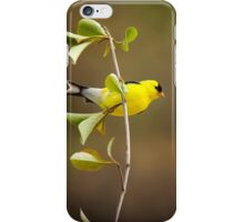 American Goldfinch Painting iPhone Case/Skin