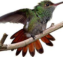 Rufous-tailed Hummingbird prints/apparel/home decor. by hummingbirds