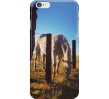 Curious horses, Kurri Kurri. NSW iPhone Case/Skin