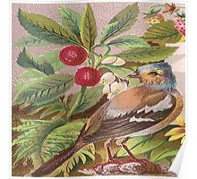 rustic,vintage,nature drawing,bird,strawberries,reproduction Poster