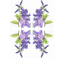 Watercolor Wildflower- Belle Pattern Photographic Print