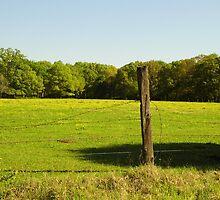 Prairie Pasture by WildestArt
