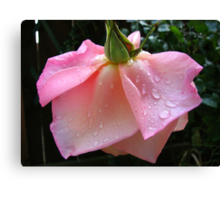 Peachy-Pink Rose After Rain Canvas Print