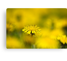 Yellow on Yellow Dandelion Canvas Print