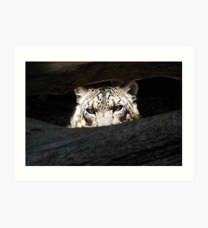 Leopard Eyes Art Print