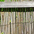 Bamboo Fence by Sophersgreen