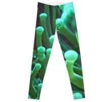 Green Sea Anemone Macro Leggings