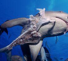 Whitetip Reef Shark by Erik Schlogl