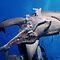 Sharks - Order - Selachimorpha - (Sea Life Category)