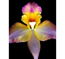 VaVaVa Voom -  Orchid Alien Discovery Photographic Print