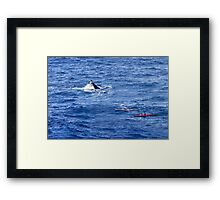 Whale watching Framed Print