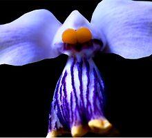 Stripe - Orchid Alien Discovery by ©Ashley Edmonds Cooke