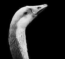 Portrait ~ Greylag Goose by Laurie Minor