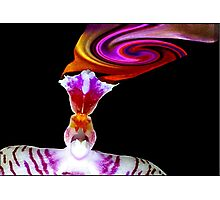 Head Trip - Orchid Alien Discovery Photographic Print