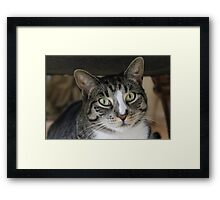 Chunk the Physically Retarded Cat Framed Print