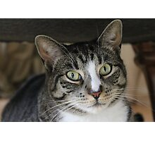 Chunk the Physically Retarded Cat Photographic Print