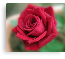 Dreamy Red Rose Canvas Print