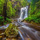 Tarkine Falls, Tasmania by Paul Pichugin