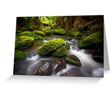 Otways Rainforest Greeting Card