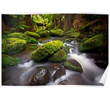 Otways Rainforest Poster