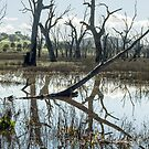 Winton Wetlands by Linda Lees
