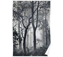 There's fog in the forest!! Poster