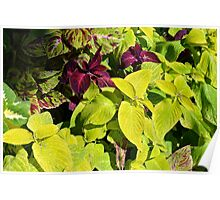Colorful green leaves pattern Poster