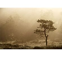 16.8.2014: Pine Tree, Summer Morning Photographic Print