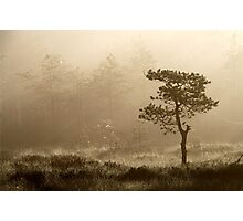 16.8.2014: Pine Tree, Summer Morning II Photographic Print