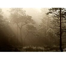 16.8.2014: Pine Trees, Summer Morning II Photographic Print