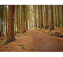Mourne Mountains Forest Photographic Print