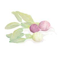 Turnips by pokegirl93