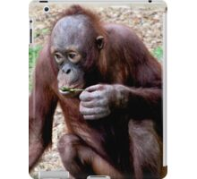 Baby orangatang eating iPad Case/Skin