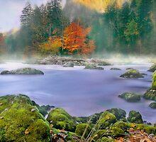 Morning fog at the river enns by Delfino