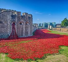 Poppies in the Moat 2 by Chris Thaxter